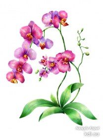 Drawn Orchid