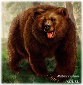 Drawn Brown bear